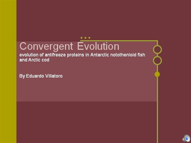 convergent evolution 3 essay In this essay, the author describes this diagram illustrates convergent evolution, the process by which species evolved in different parts of the globe independently.