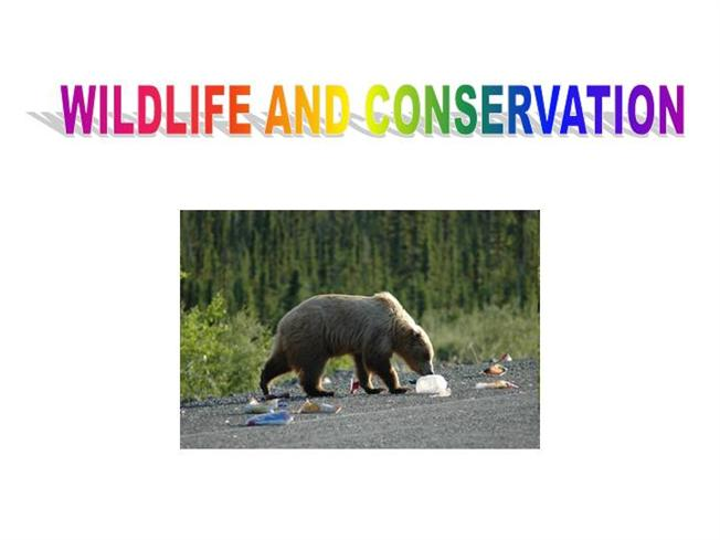 Essay on wildlife