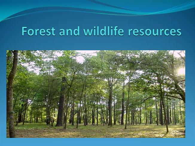 forest and wildlife conservation Forest wildlife management develops projects to enhance forest wildlife, monitoring forest animal species, and the collection of data on the condition and extent of the key wildlife that inhabit illinois' forests.