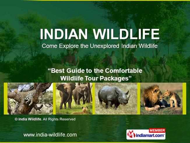 essay on save wildlife in india Ci is a non-profit, non-commercial portal that aims to facilitate wildlife and nature conservation by providing reliable information and the.