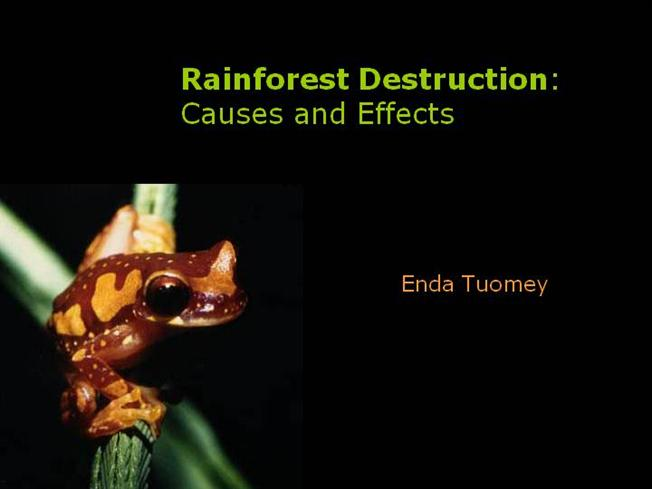 an introduction to the reasons for the destruction of the rainforest Introduction causes a complex web of factors is contributing to the destruction of rainforest destruction: causes and effects what do you think of the title.