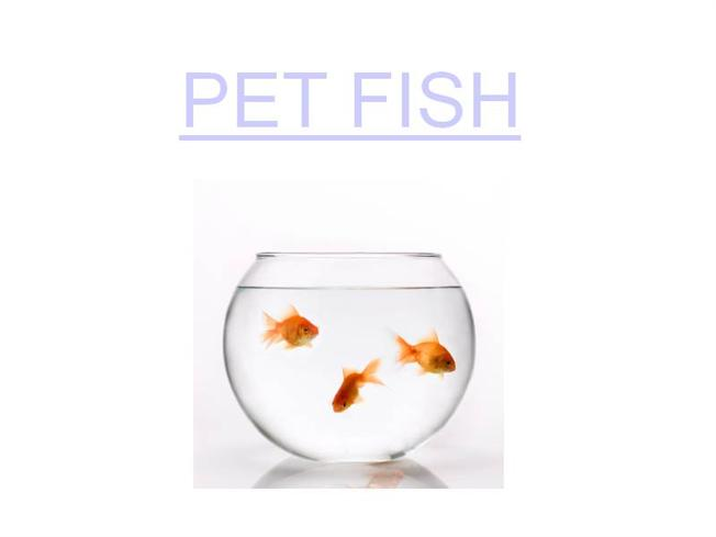 How to take care of your pet fish authorstream for How to take care of a fish