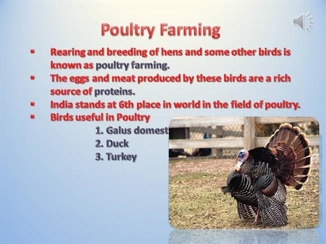 Poultry Farming Authorstream