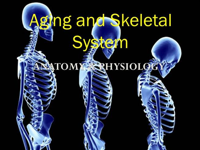 Aging And Skeletal System Copy Authorstream