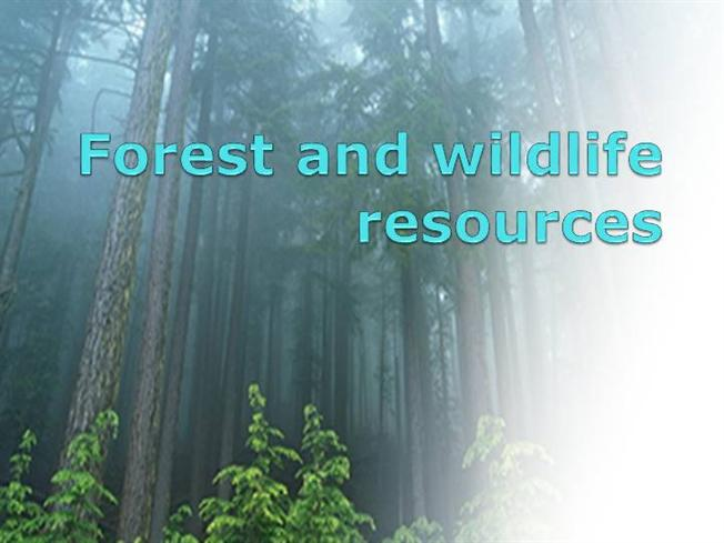 forest essential essay It goes without saying that ,forests are essential part the world we currently know to what extent do you agree or disagree  essay topics: forests are the.