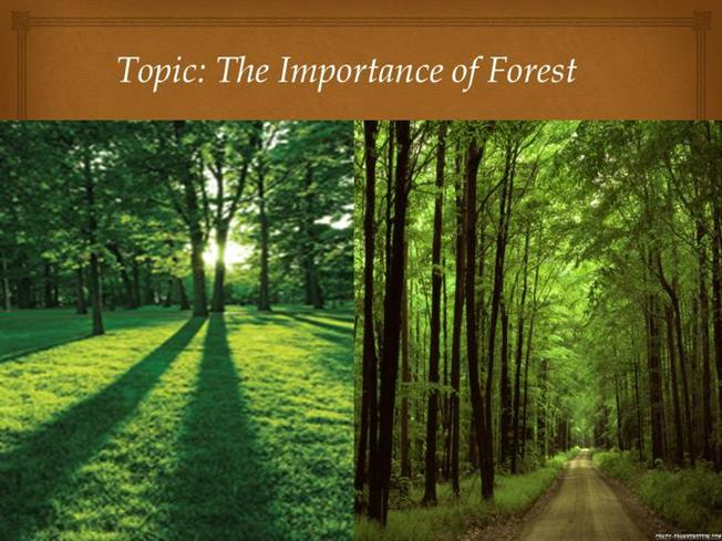 important of forest Forests provide a wide range of economic and social benefits for instance through employment, value generated from the processing and trade of forest products, and investments in the forest sector benefits also include the hosting and protection of sites and landscapes of high cultural, spiritual, or recreational value.