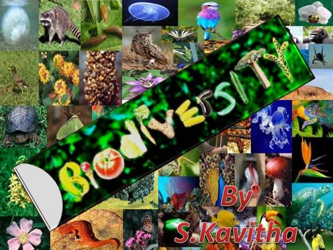 is biodiversity overprotected debate As seen in the biodiversity section of this web site, diversity is important because of the free services offered by nature, that allow species to survive.