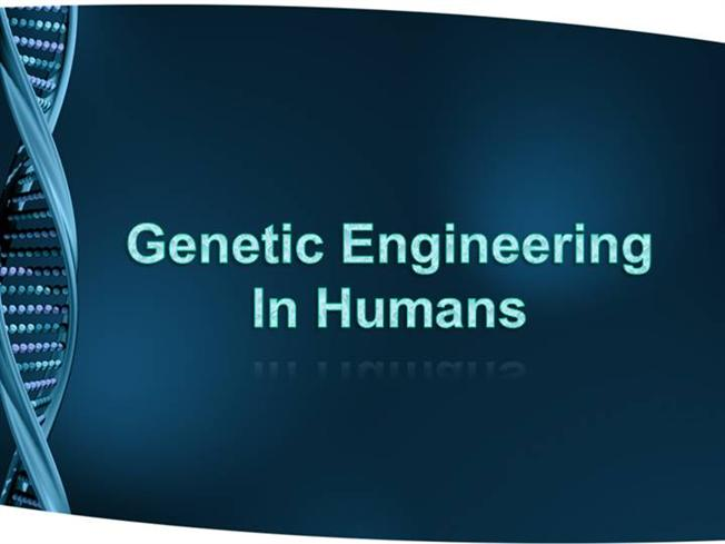 an analysis of the genetic engineered humans Genetically modified food genetic modification and human health benefits biology essay but through many years of experimental analysis as well as safety.