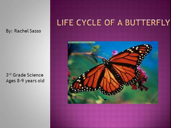 essay on butterfly life cycle Life cycle of a butterfly keyword essays and term papers available at echeatcom, the largest free essay community.