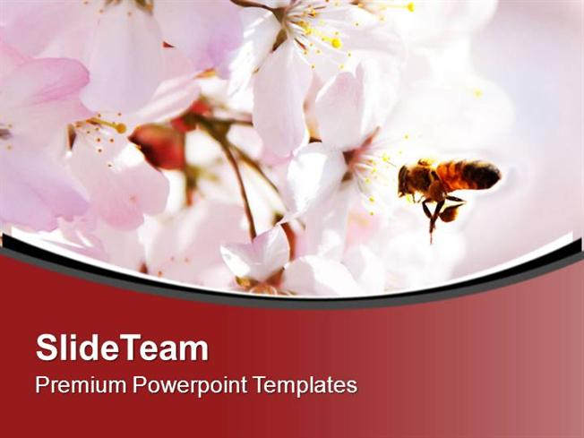 Bright Color Honey Bee And Flower Background Powerpoint Templates