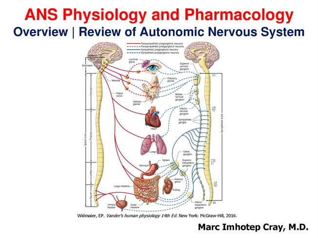 Introduction To The Autonomic Nervous System Extended Authorstream