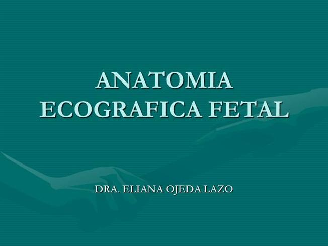 ANATOMIA ECOGRAFICA FETAL |authorSTREAM