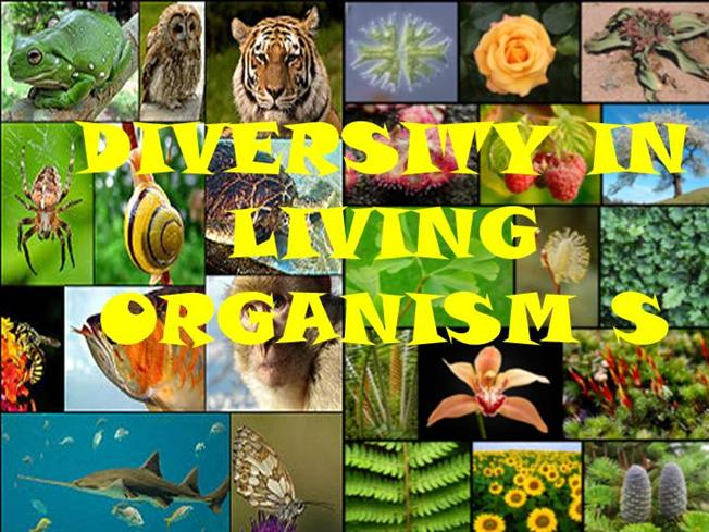 diversity in living organism Question: the class aves have all the following features except that their.