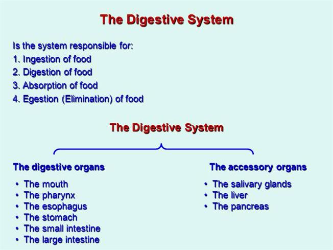 The Digestive System