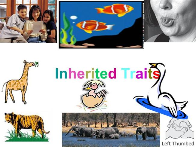 Character Trait Powerpoint Character Traits 3rd Grade