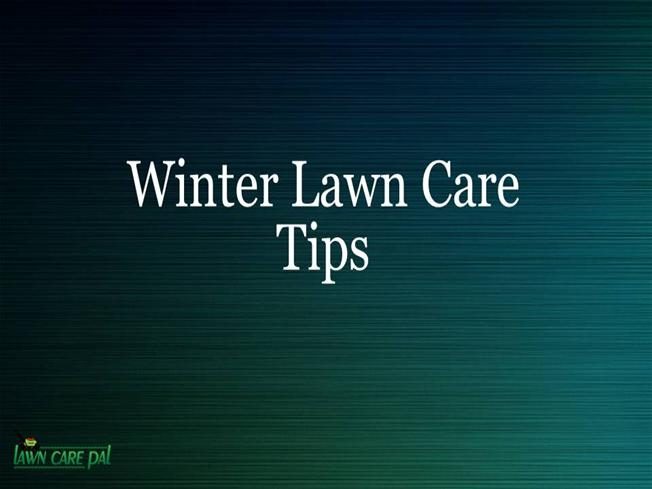 Winter lawn care tips authorstream - Winter lawn care advice ...