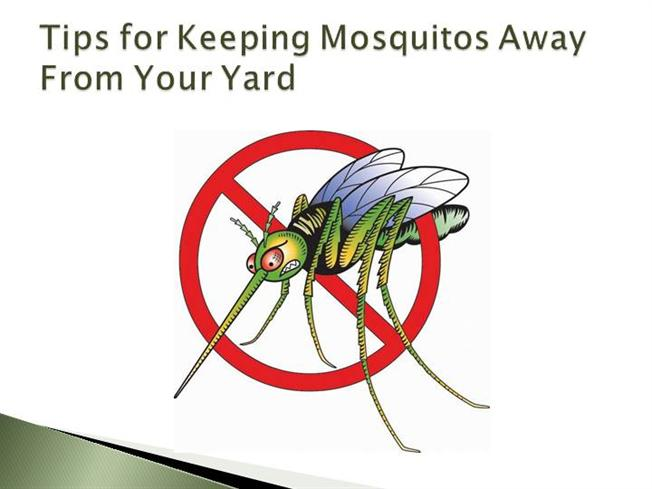 Tips For Keeping Mosquitos Away From Your Yard Authorstream
