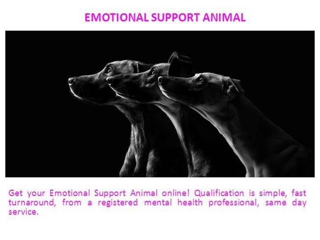 emotional support animal authorstream. Black Bedroom Furniture Sets. Home Design Ideas