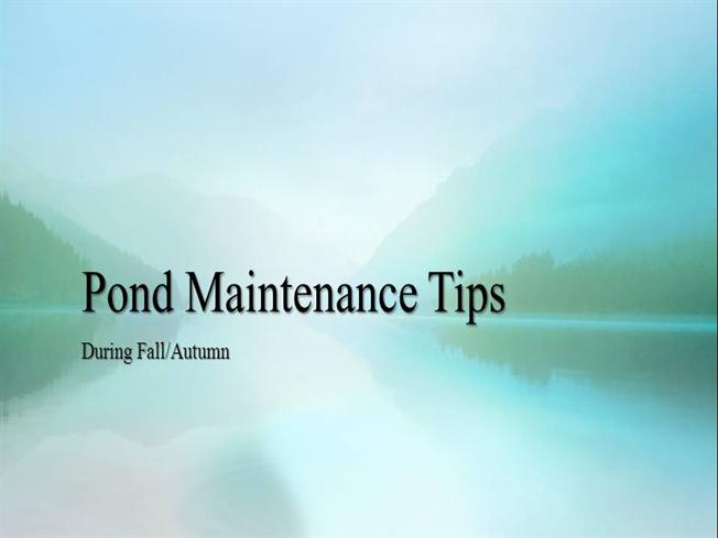 Autumn Fall Pond Maintenance Tips Authorstream