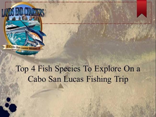 Top 4 fish species to explore on a cabo san lucas fishing for What do you need to get a fishing license