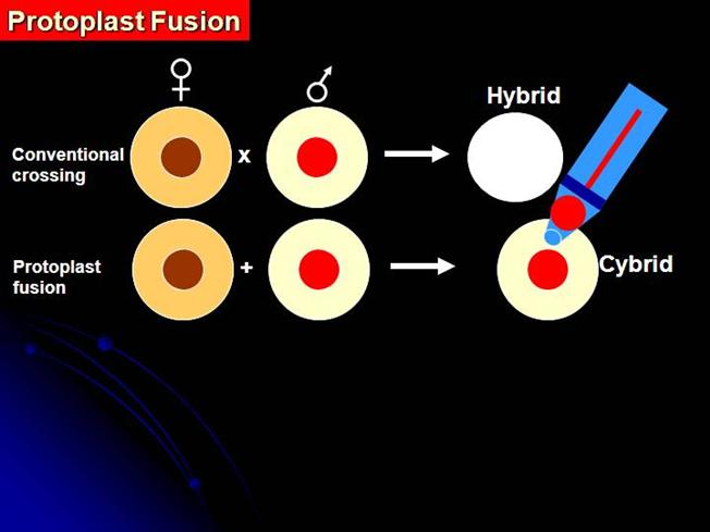 Protoplast Fusion Animated Depiction