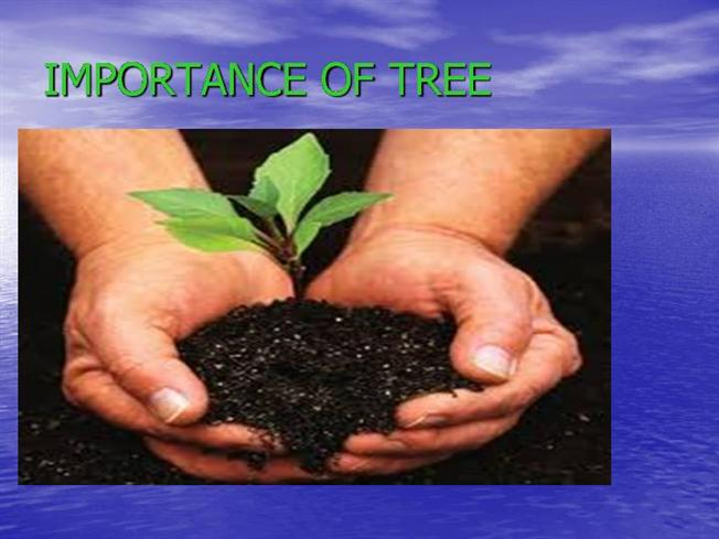 essays on trees importance importance and value of trees since the beginning, trees have furnished us with two of life's essentials, food and oxygen as we evolved, they provided additional necessities such as shelter, medicine, and tools.