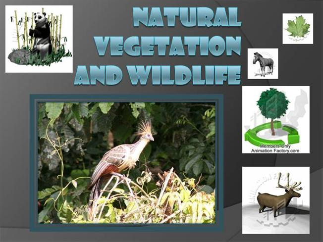 wildlife and natural vegetation Due to its geographic location, the state of andhra pradesh is considered one of  the rich biodiversity states in india natural vegetation and animal life depend.