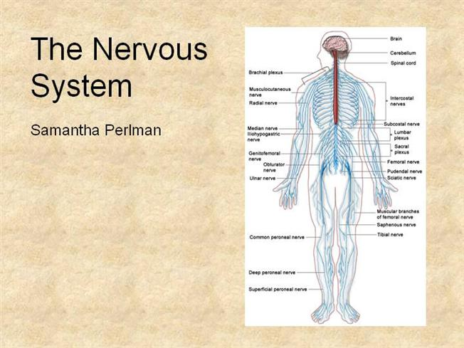 nervous system and electronic reserve readings Myocardial infarction from university of zurich the sympathetic nervous system sympathetic nervous system reading: further readings.