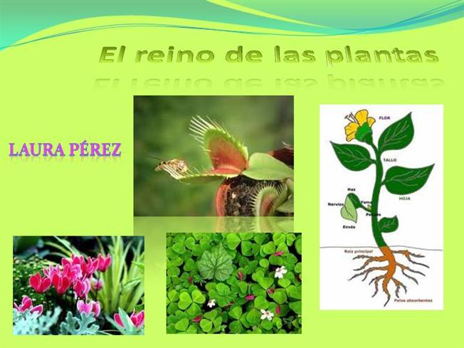El reino de las plantas laura authorstream for Clasificacion de las plantas ornamentales