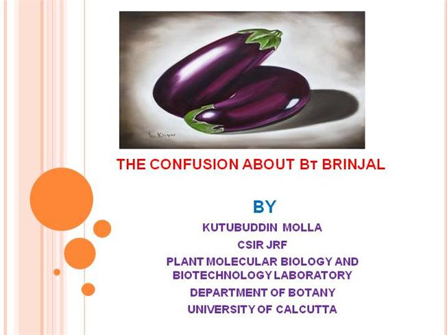 ppt on bt brinjal Presented by arvind pawarkishore kumar niranjan sen concerns about bt brinjal relate to its possible adverse impact on human health and.