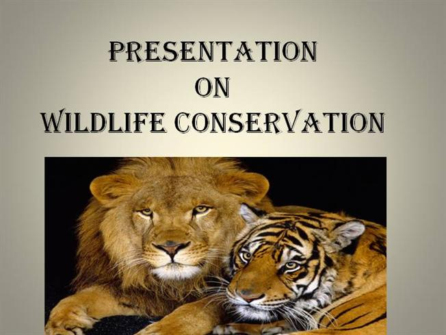 protect wildlife essay This chapter will discuss the protection of other species by humans, mainly in the usa the protective legislation inspired by the wanton destruction of wildlife in the 19th century was the first of a long line of legislative efforts that eventually led to modern endangered species legislation (table 61) early wildlife conservation.