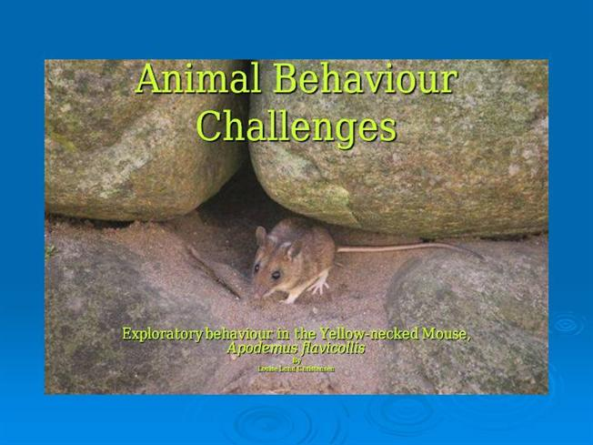 animal behavior presentation copy Although most animal behaviors are associated with some form of heritable  genetic variation, we do not yet understand how genes sculpt.