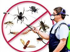 Insect Killer Servic...