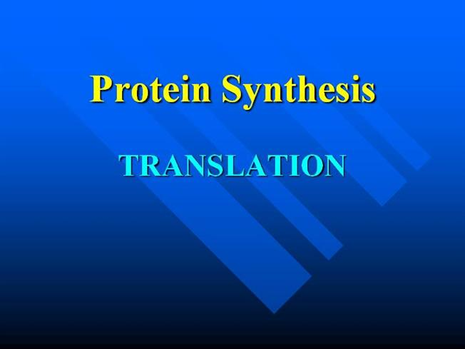 Protein synthesis pdf ppt convert