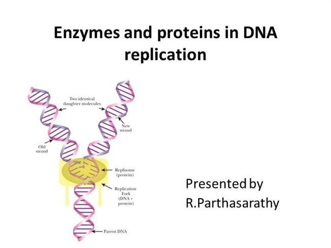 Dna Replication Protein Enzymes And Proteins in Dna