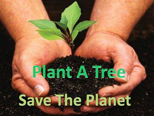 save tree save life essay