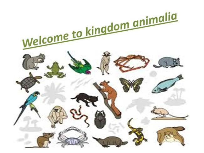 Kingdom Animalia |authorSTREAM