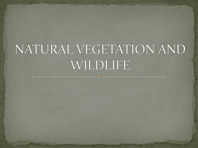 Natural Vegetation And Wildlife Authorstream
