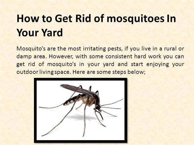 how to get rid of mosquitoes in your yard authorstream. Black Bedroom Furniture Sets. Home Design Ideas