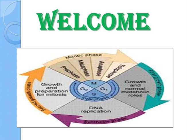 Ppt cell cycle powerpoint presentation id:705025.