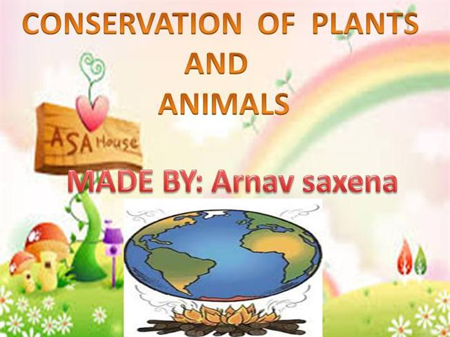 How to Conserve Plants and Animals