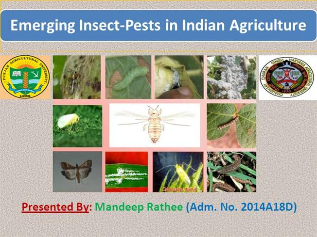 EMERGING INSECT PESTS of INDIAN AGRICULTURE |authorSTREAM