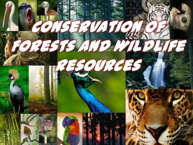 Essay on forest and wildlife conservation