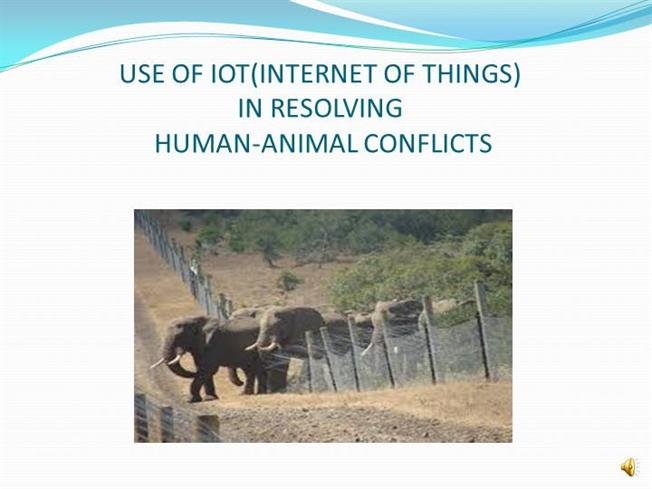 Human animal conflicts