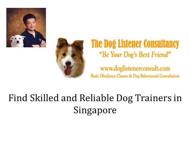 Find Skilled And Reliable Dog Trainers in Singapore